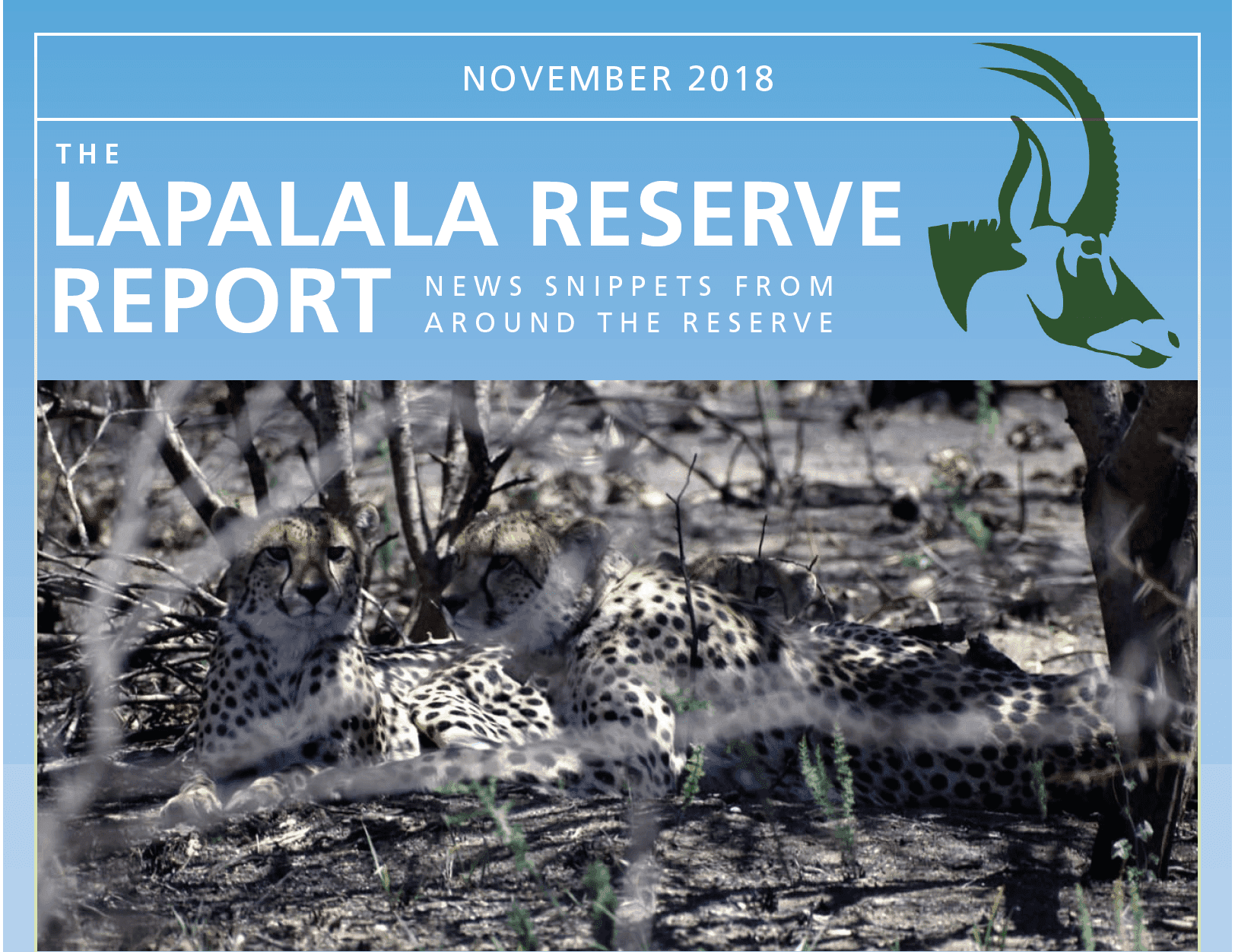 Lapalala Reserve Report – November 2018